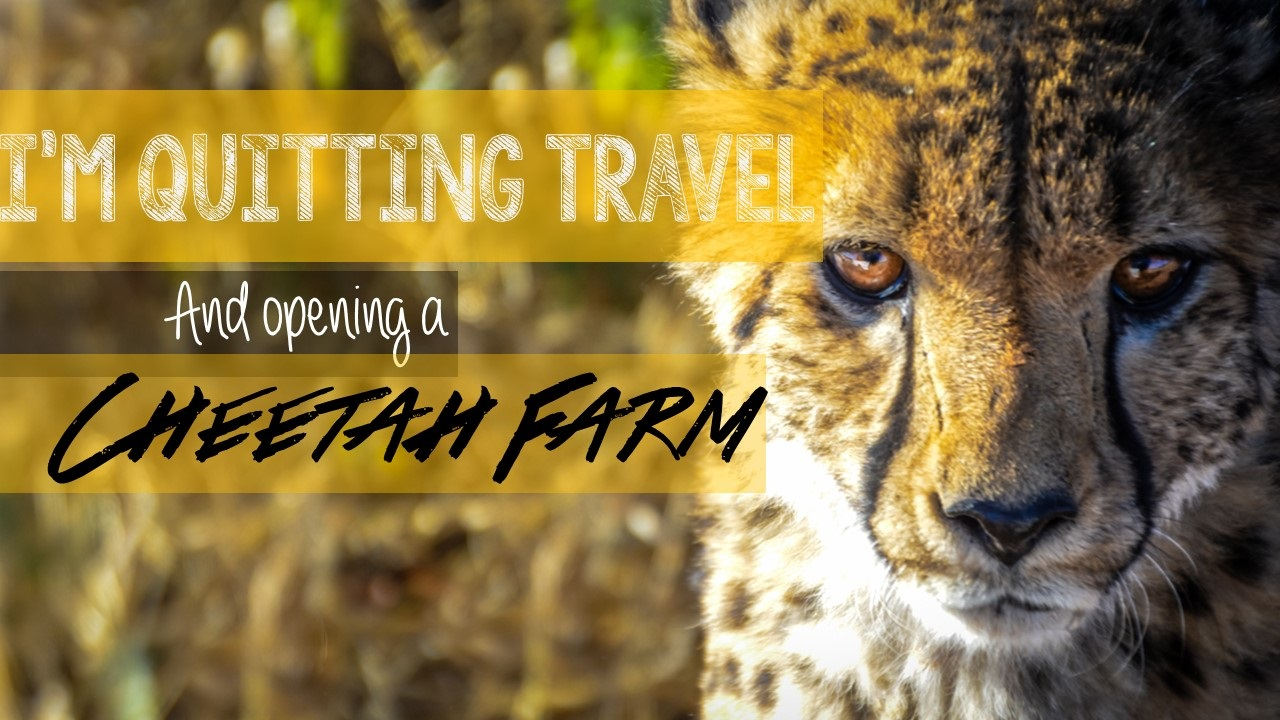I'm quiting traveling and opening a cheetah farm