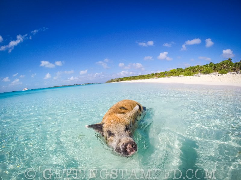 Swimming with the pigs Bahamas