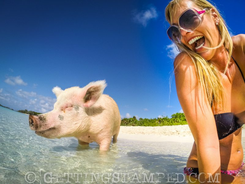 swimming with the pig Bahamas
