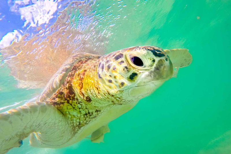 Playa-del-Carmen-travel-guide-Things-to-do-in-Playa-del-Carmen-Swimming-with-the-sea-turtles-Akumal