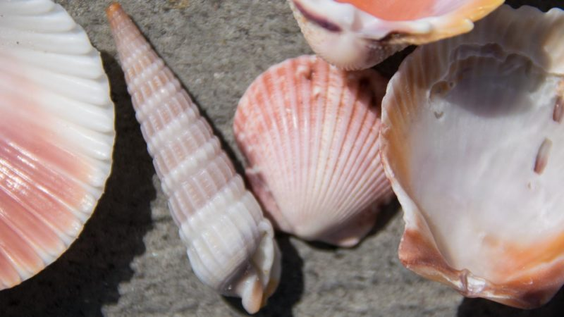 Sea Shells outside of the National Sea Shell Museum - a must visit place in Fort Myers