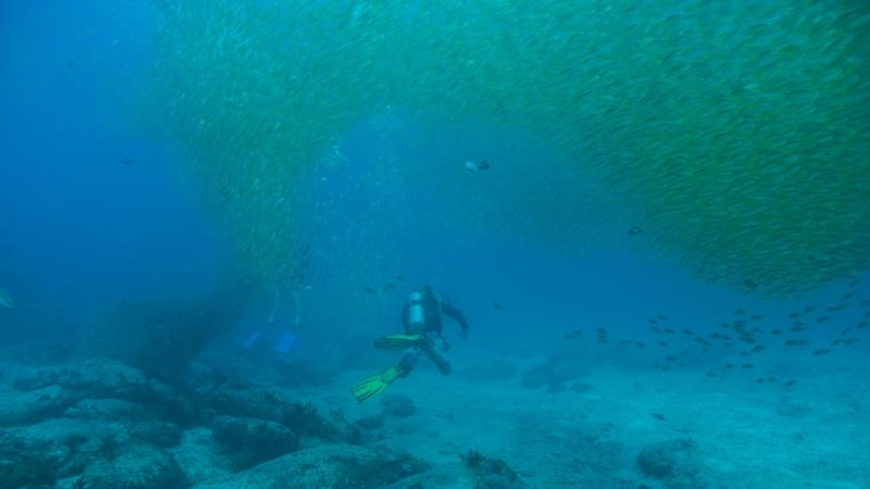 diver at Stonehenge Koh Lipe with a large school of yellow snapper