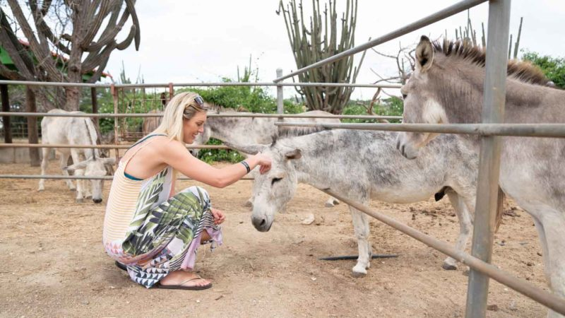 Woman petting a donkey at the Aruba Donkey Sanctuary - Things to do