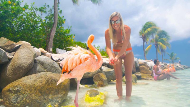 girl feeding a flamingo in Aruba